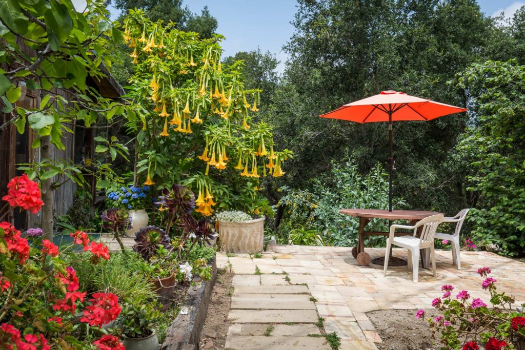 trumpet flower patio with umbrella
