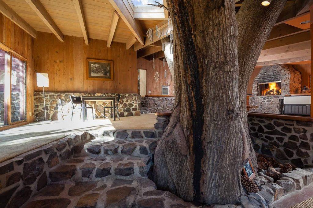 tree in living room live oak