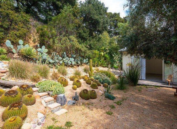 cactus garden dry