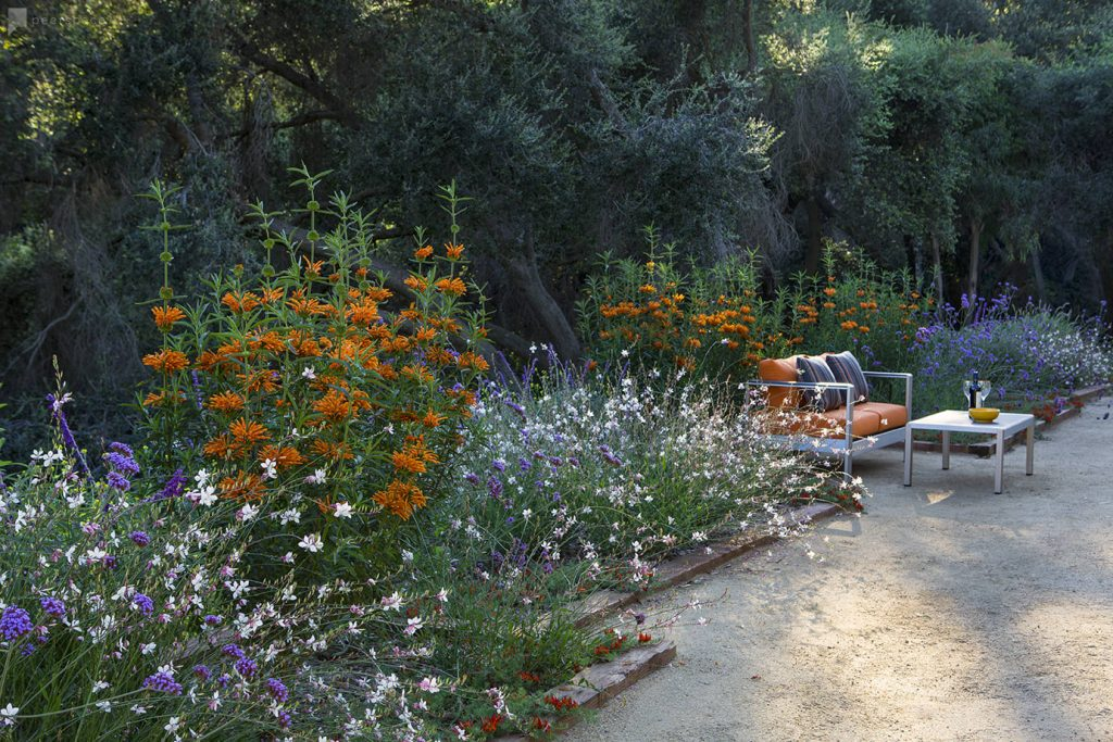 drought-tolerant-border