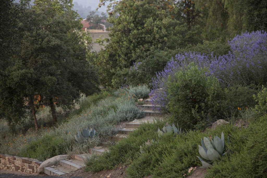 hillside native topanga garden